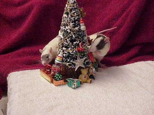 ChristmasRats