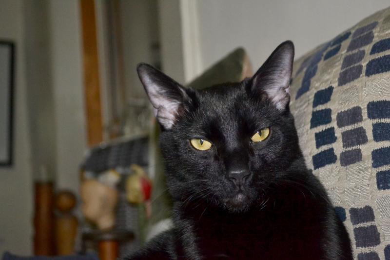 Datlow_cat